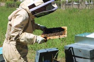 Rencontre avec une apicultrice